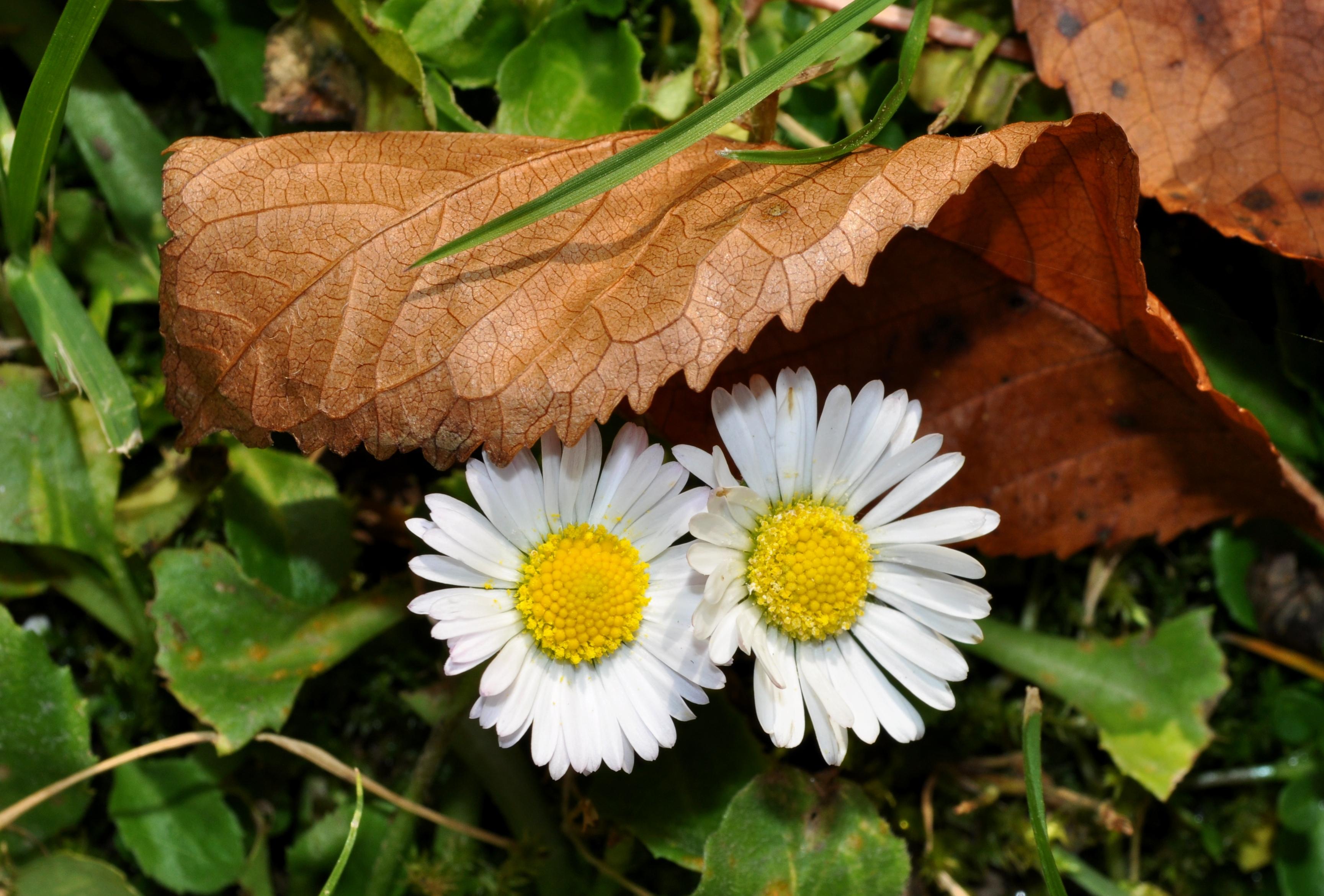 Jesenné sedmokrásky
