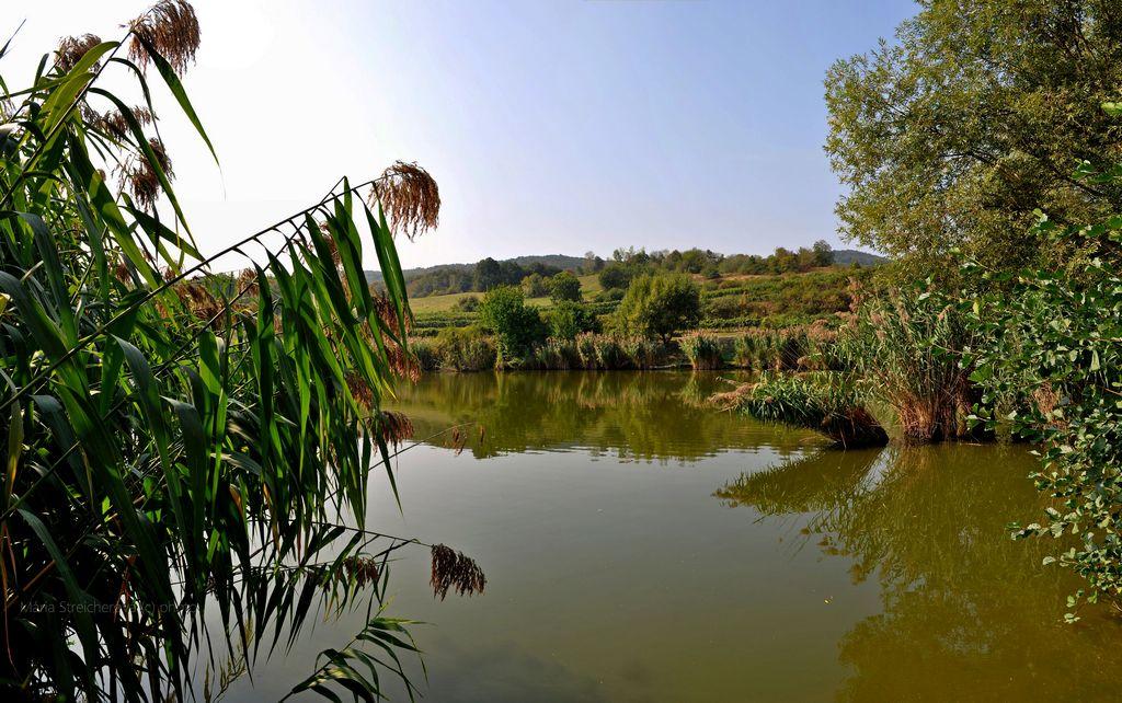 Pokojná hladina jazera, brehy obrastené rákosím a kríkmi, zrkadlenie brežných rastlín v hladine jazera.