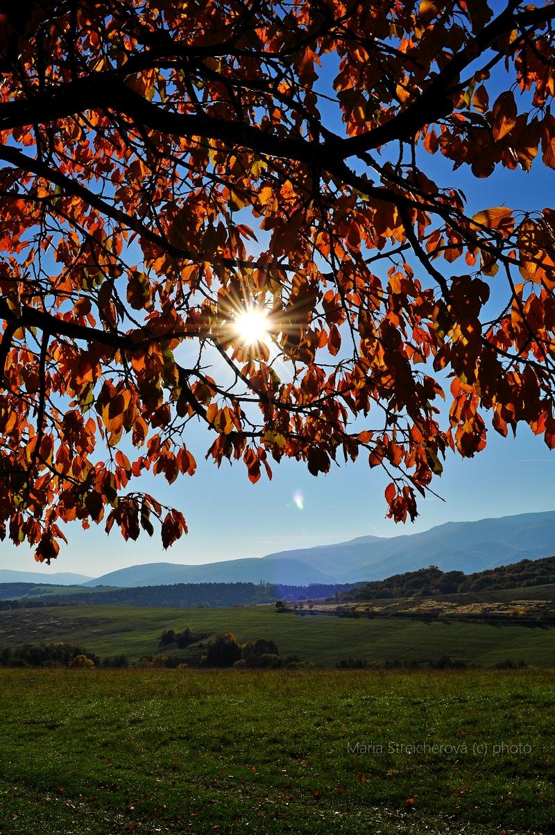 Záber jesennej krajiny s ďalekým horizontom sivomodrých pahorkov s presvitajúcimi lúčmi slnka cez sito červených, jesenne sfarbených, listov čerešne.