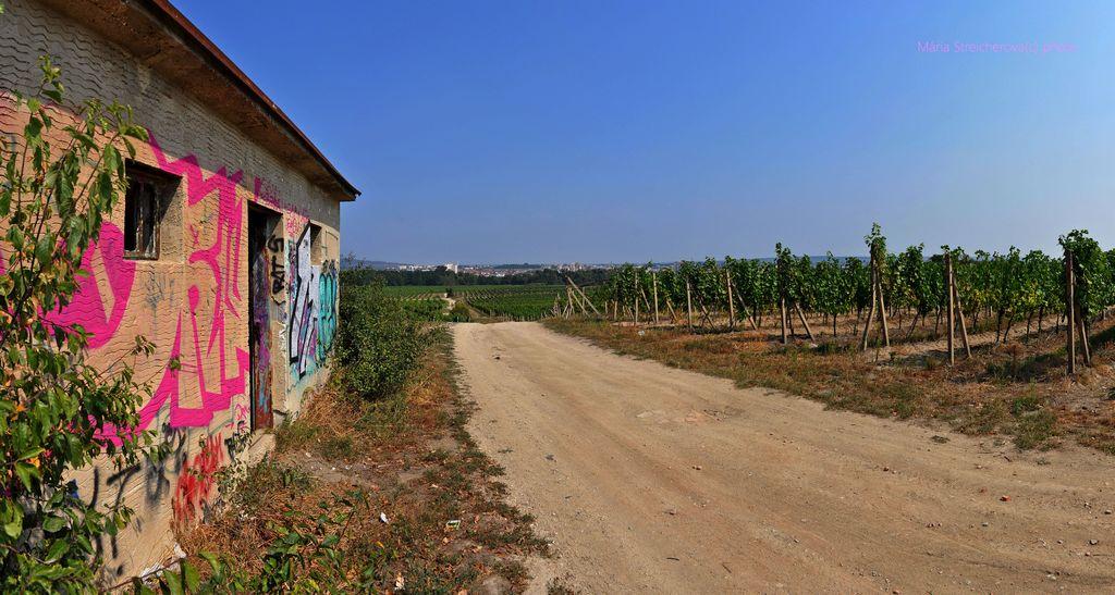 Krajina so zelenými riadkami viniča, cestou a domom pomaľovaným grafiti obrazmi. V pozadí mesto.