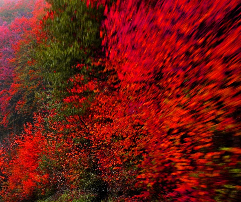 Farebne upravený záber jesenného lesa.