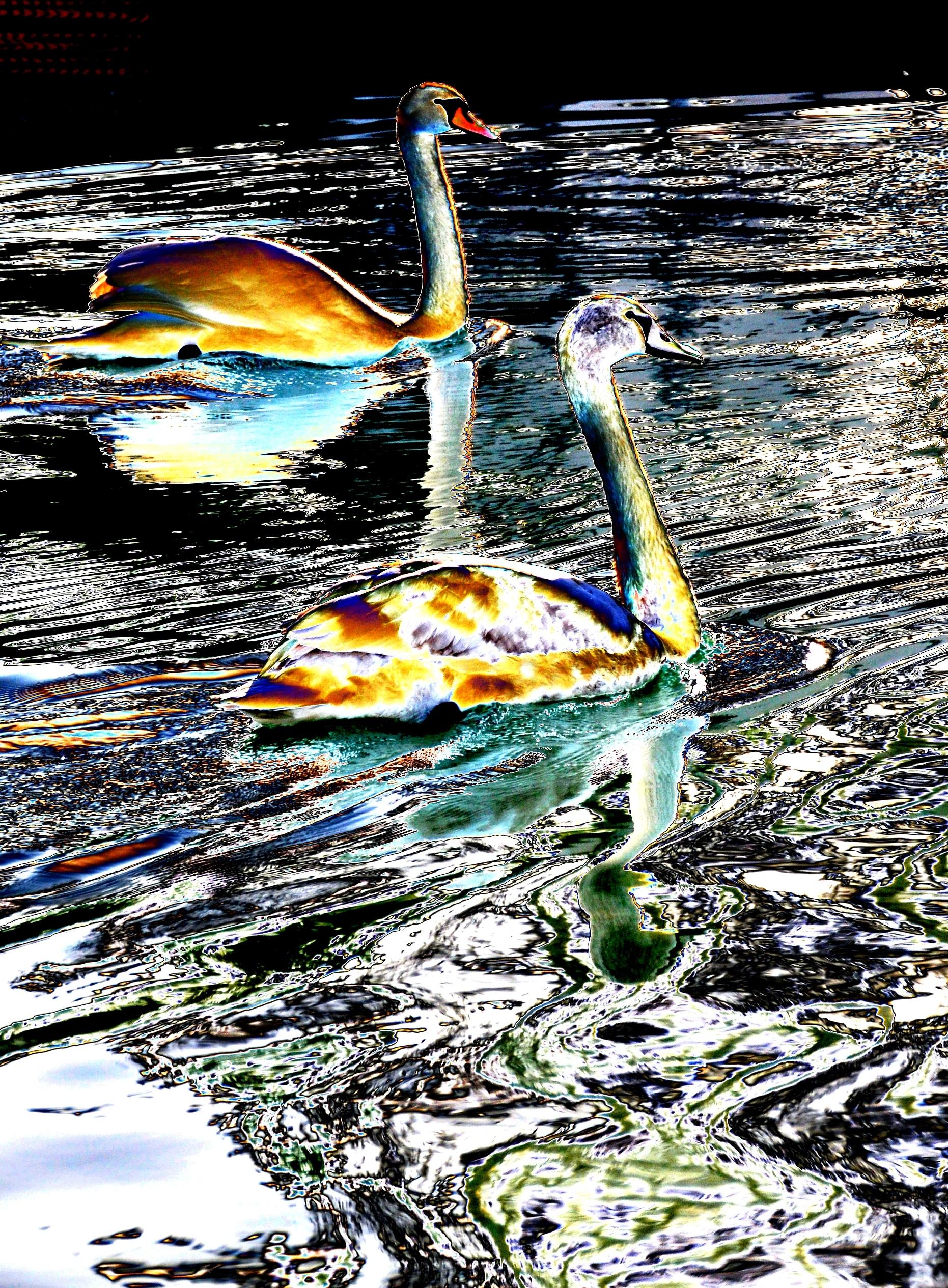 Labute na jazere