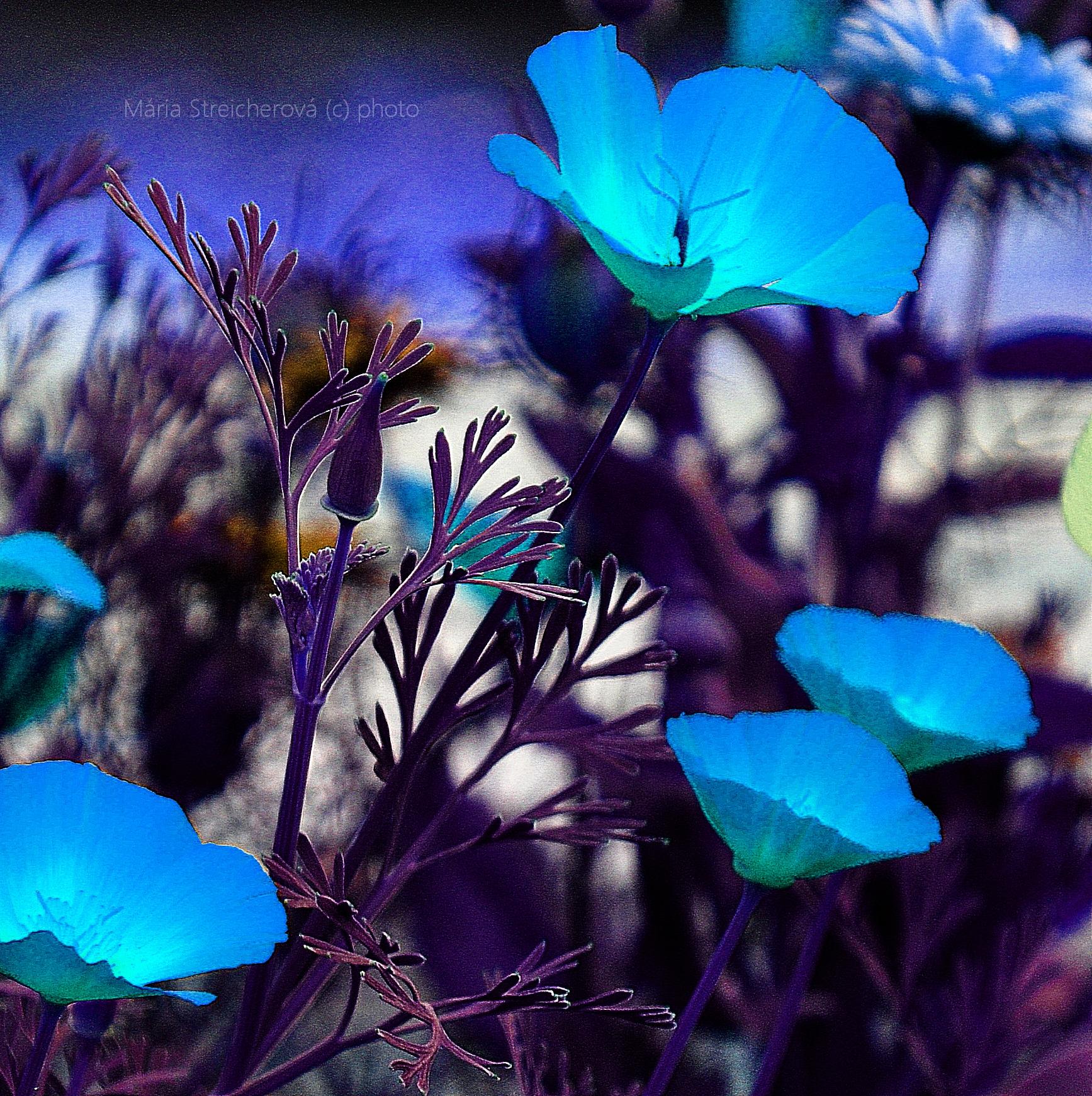 Graficky upravený záber kvetov a listov v odtieňoch tyrkysovomodrej a fialovej farby.