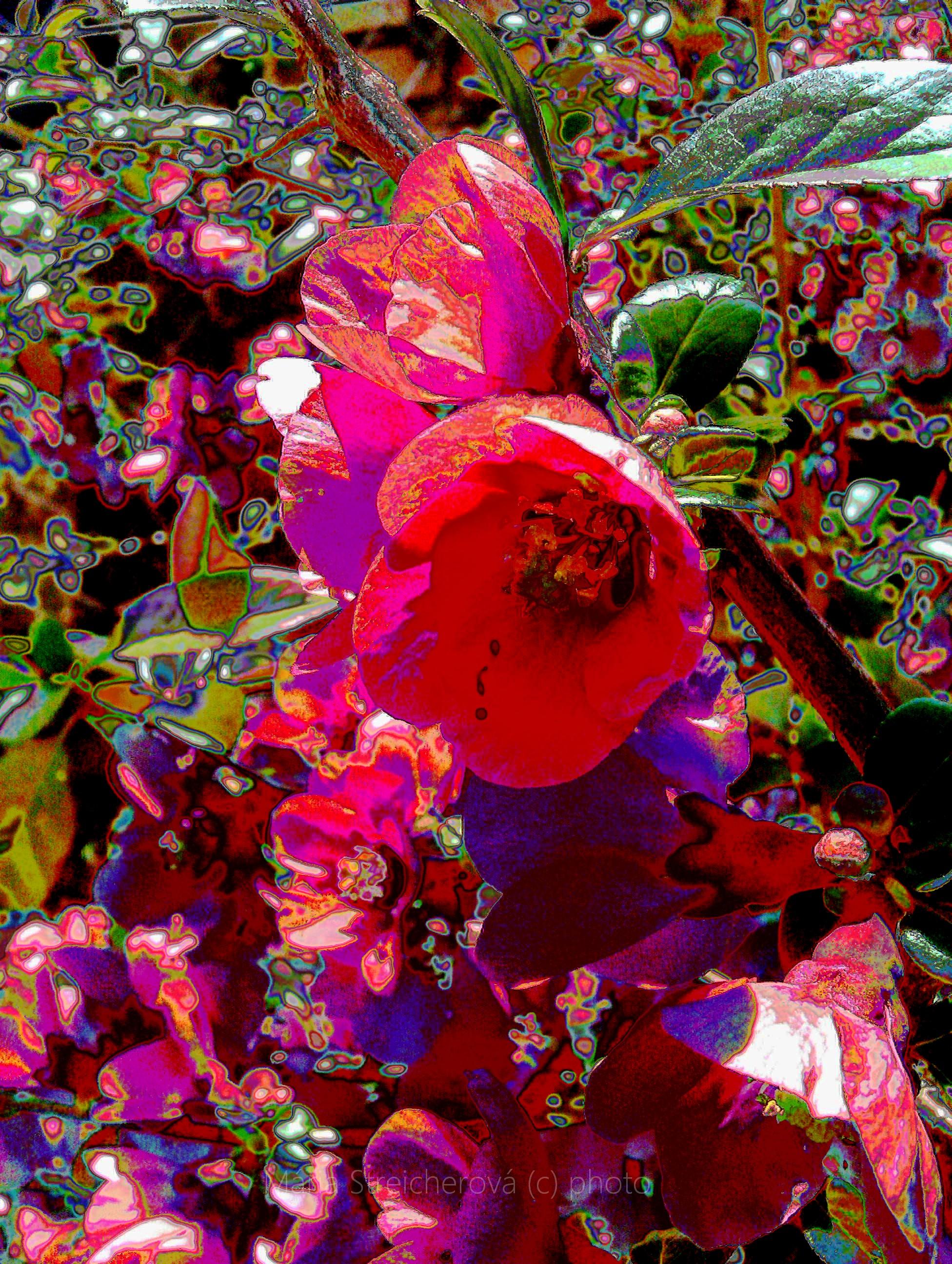 Rozkvitnutý krík vo farebnej pestrej úprave