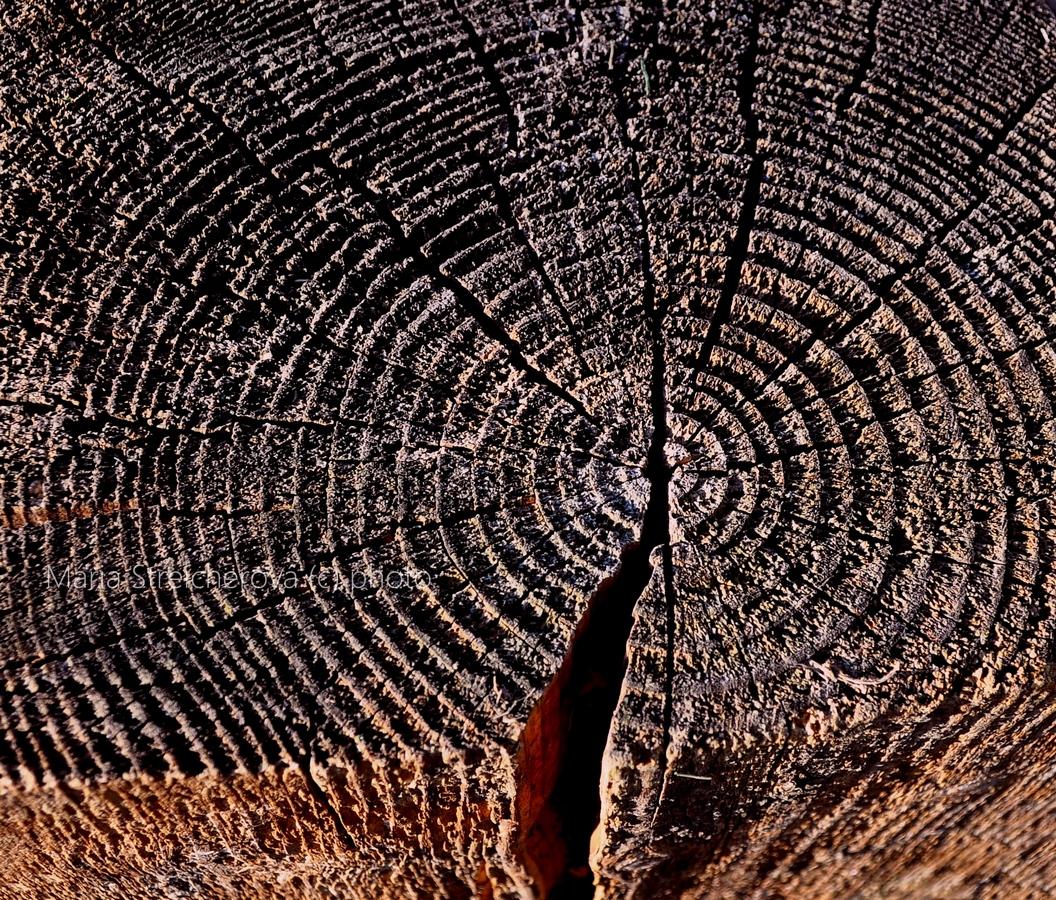 Detailný záber zvetranej štruktúry dreva na odpílenom reze.