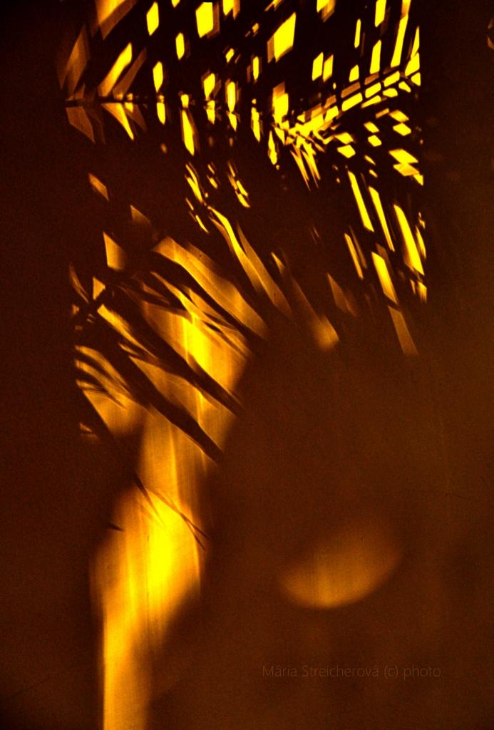 Tmavohnedé tiene palmových listov v lúčoch zapadajúceho slnke, na žltej stene.