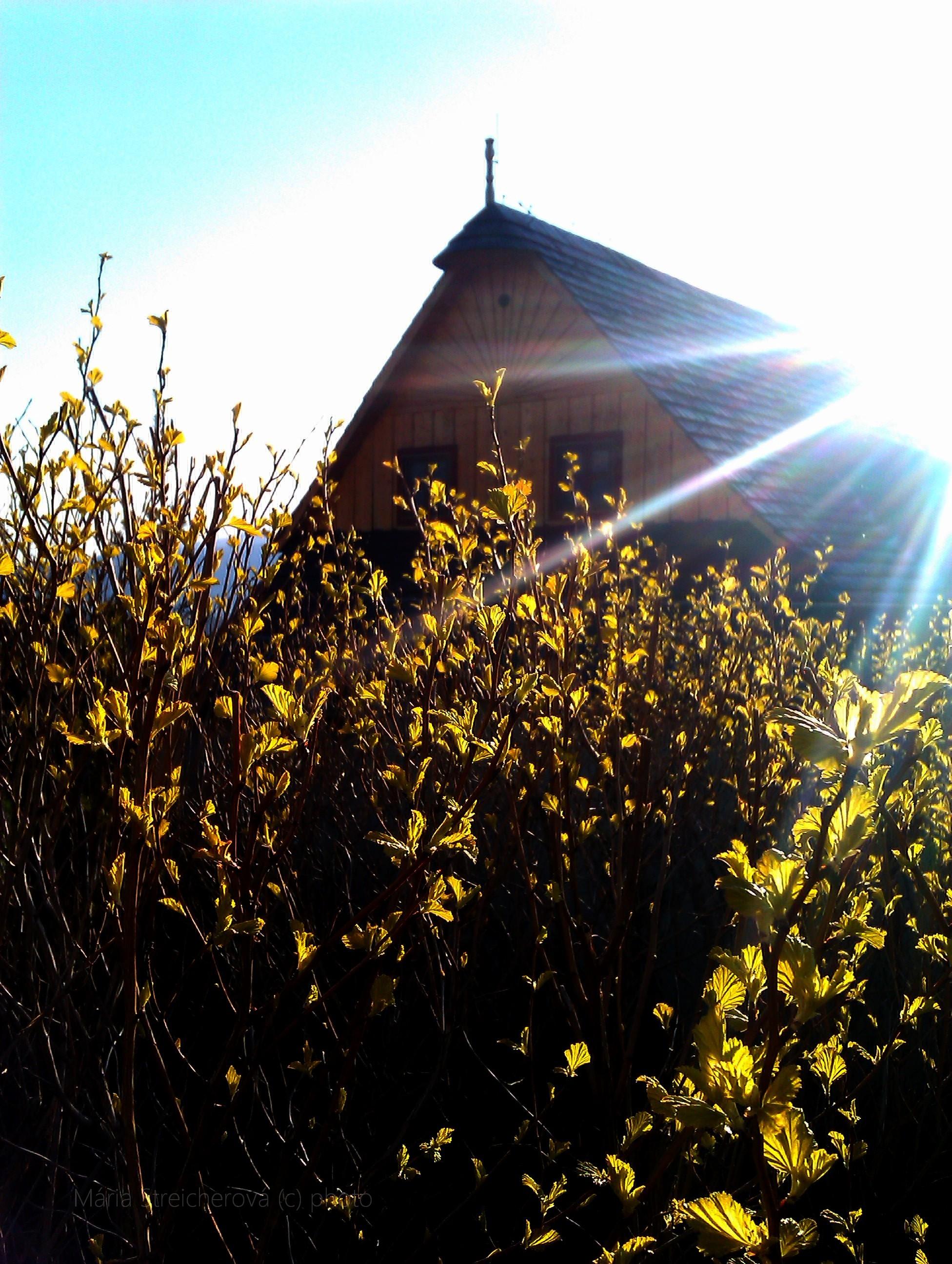 Mladé lístky pučiacich kríkov v protisvetle zapadajúceho slnka.